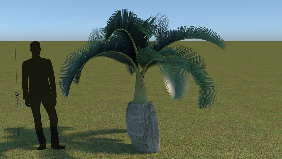 64 trees plants royalty-free 3d model - Preview no. 10