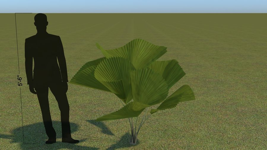 64 trees plants royalty-free 3d model - Preview no. 34