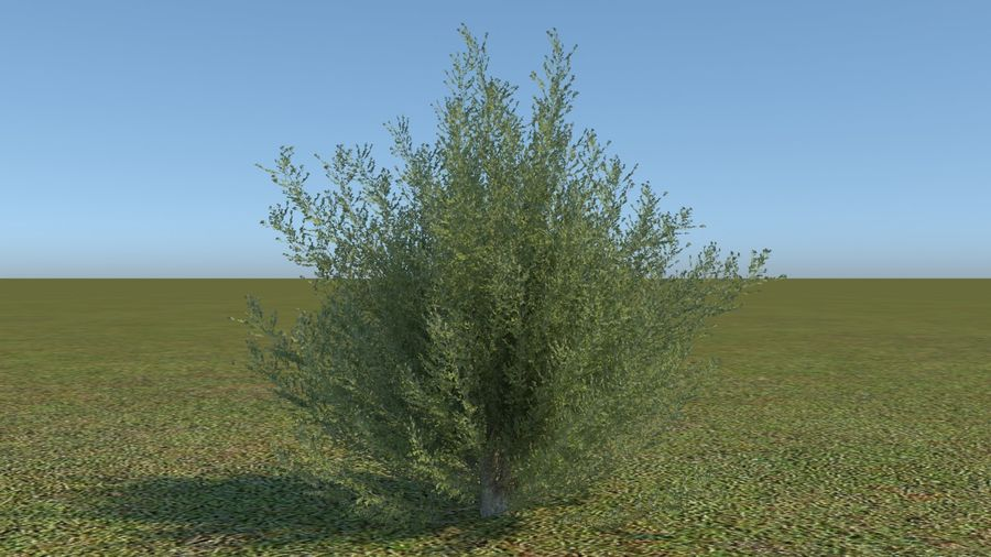64 trees plants royalty-free 3d model - Preview no. 22