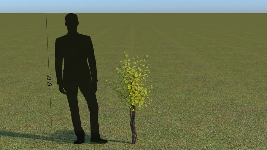 64 trees plants royalty-free 3d model - Preview no. 42