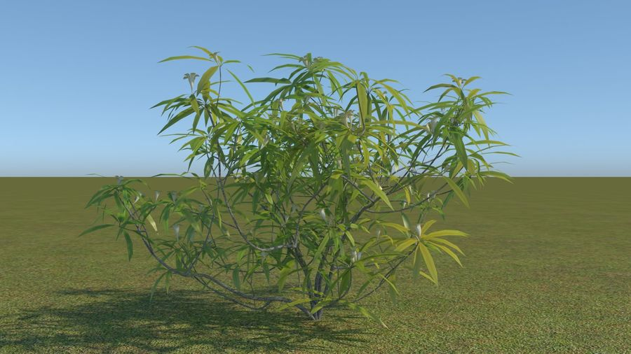 64 trees plants royalty-free 3d model - Preview no. 52
