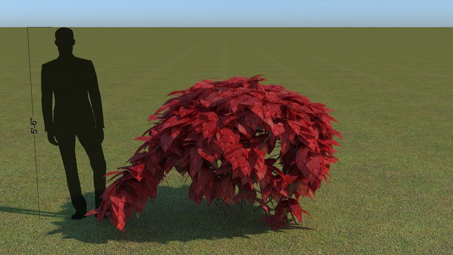 64 trees plants royalty-free 3d model - Preview no. 29