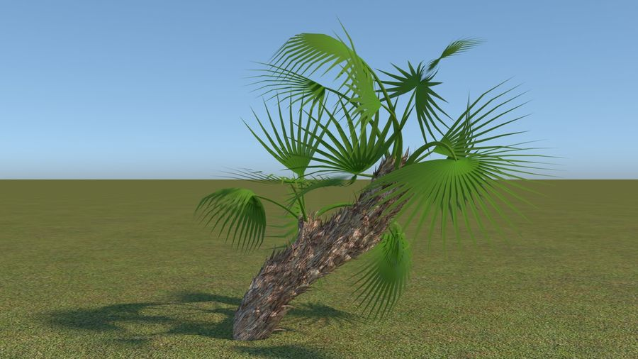 64 trees plants royalty-free 3d model - Preview no. 28