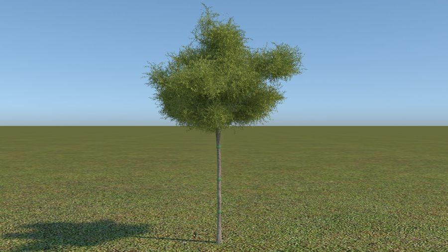 64 trees plants royalty-free 3d model - Preview no. 24