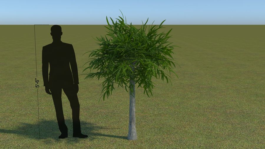 64 trees plants royalty-free 3d model - Preview no. 31