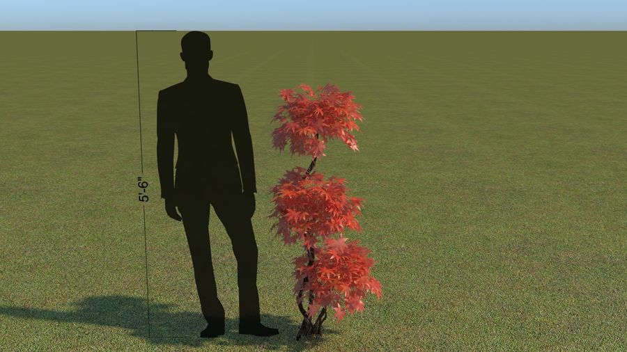 64 trees plants royalty-free 3d model - Preview no. 46