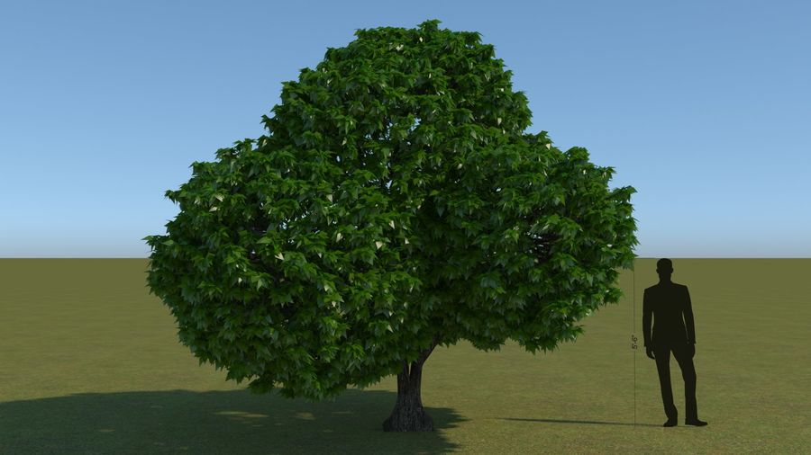 64 trees plants royalty-free 3d model - Preview no. 18