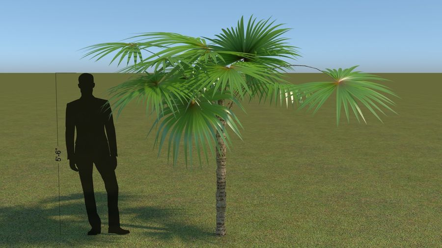 64 trees plants royalty-free 3d model - Preview no. 15