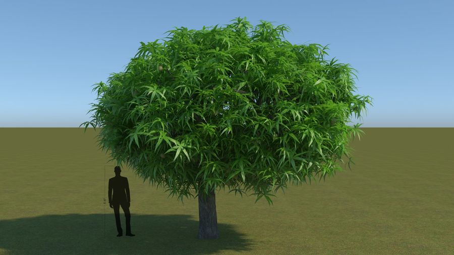 64 trees plants royalty-free 3d model - Preview no. 9