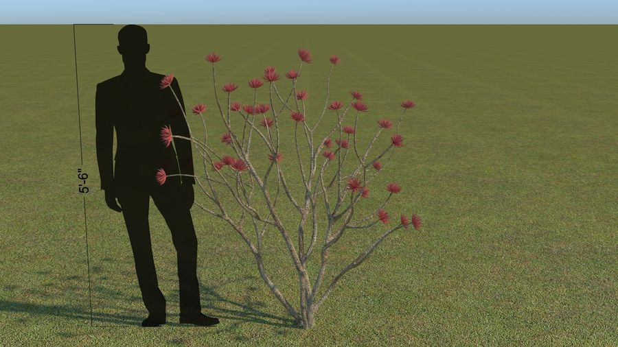 64 trees plants royalty-free 3d model - Preview no. 39