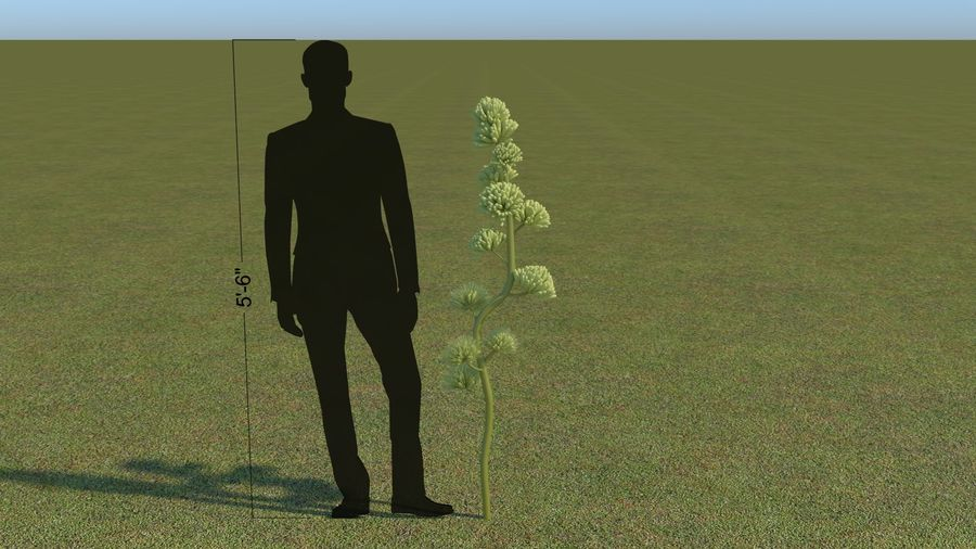 64 trees plants royalty-free 3d model - Preview no. 40