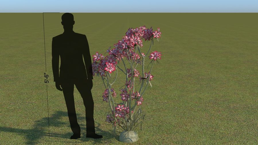 64 trees plants royalty-free 3d model - Preview no. 44