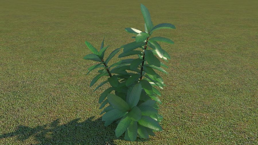 64 trees plants royalty-free 3d model - Preview no. 57