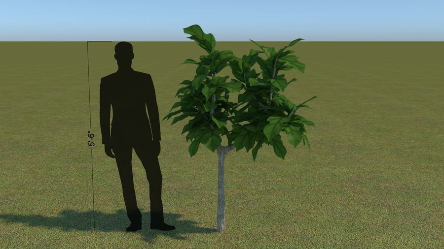 64 trees plants royalty-free 3d model - Preview no. 33