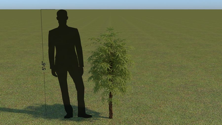 64 trees plants royalty-free 3d model - Preview no. 41