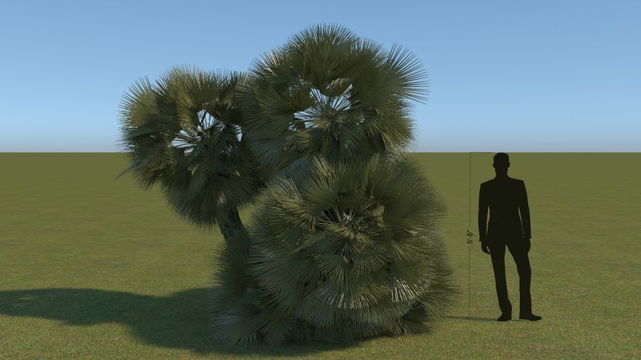 64 trees plants royalty-free 3d model - Preview no. 11