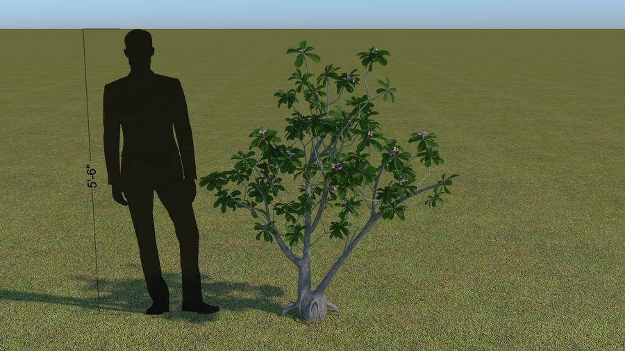64 trees plants royalty-free 3d model - Preview no. 38