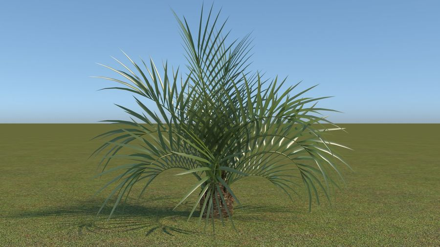 64 trees plants royalty-free 3d model - Preview no. 25