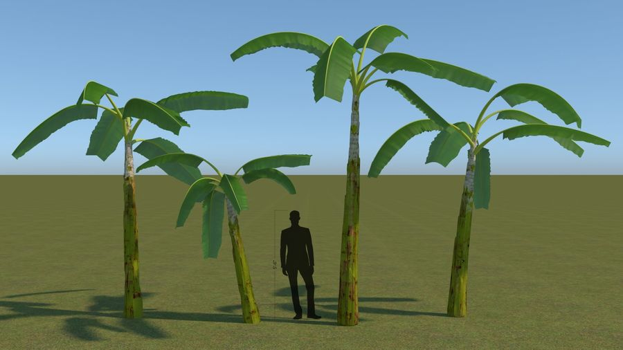 64 trees plants royalty-free 3d model - Preview no. 13
