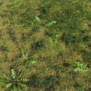 Fig Buttercup Meadow Patch 3d model