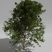 Groene boom 3d model