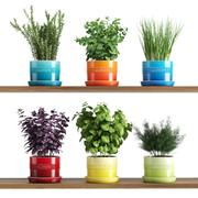 Kitchen Herbs In Le Creuset planters 3d model