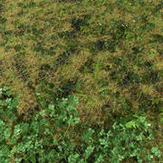 Ashweed Meadow Patch 3d model
