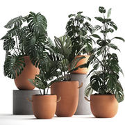 Collection Exotic plants Monstera 423 3d model