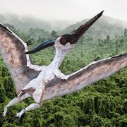 Белый птерозавр птеранодон, приспособленный для майя 3d model