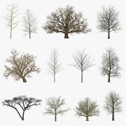 Winter Trees Collection 3 3d model