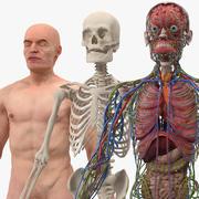 Mannelijke skelet interne organen anatomie en huid 3d model