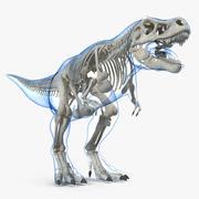 Tyrannosaurus Rex Skeleton with Skin 3d model