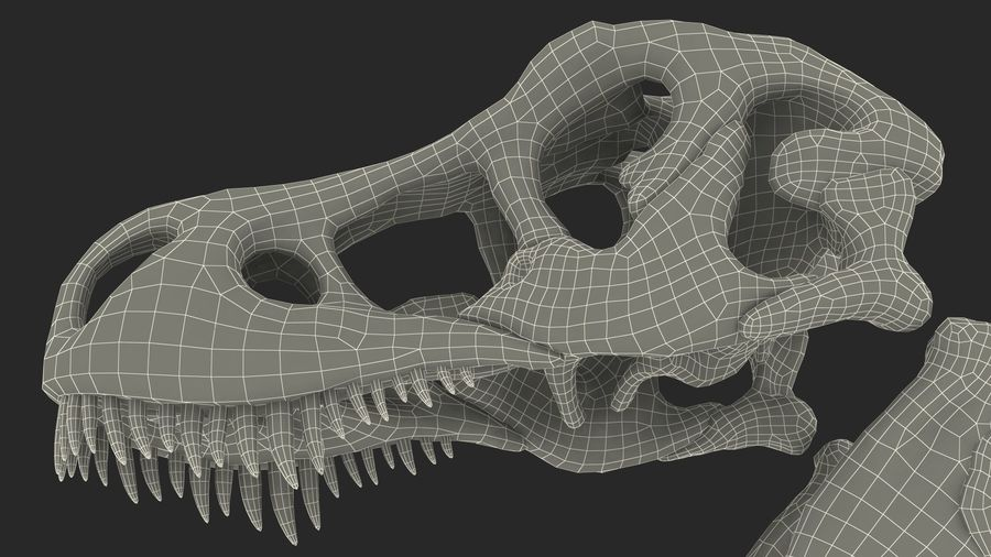 Tyrannosaurus Rex Skeleton Fossil with Skin Walking Pose royalty-free 3d model - Preview no. 32