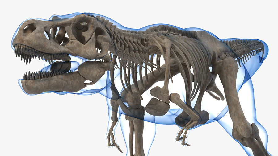 Tyrannosaurus Rex Skeleton Fossil with Skin Walking Pose royalty-free 3d model - Preview no. 5