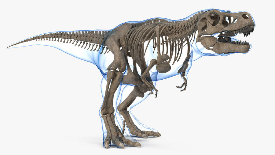 Tyrannosaurus Rex Skeleton Fossil with Skin Walking Pose royalty-free 3d model - Preview no. 2