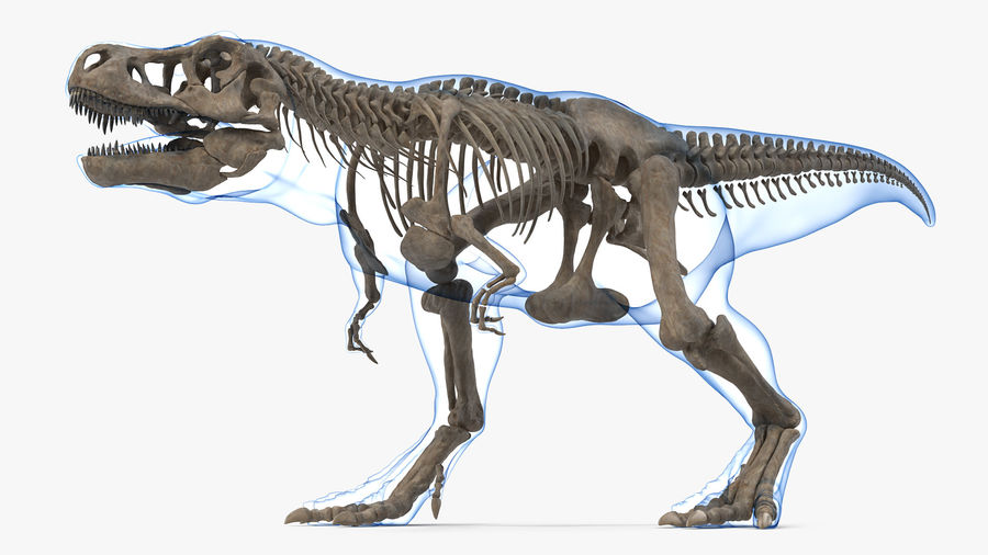 Tyrannosaurus Rex Skeleton Fossil with Skin Walking Pose royalty-free 3d model - Preview no. 4