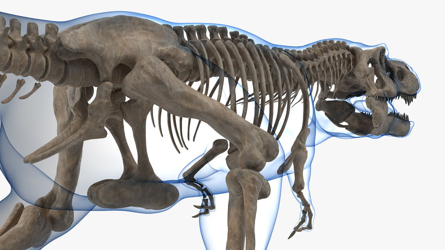 Tyrannosaurus Rex Skeleton Fossil with Skin Walking Pose royalty-free 3d model - Preview no. 8