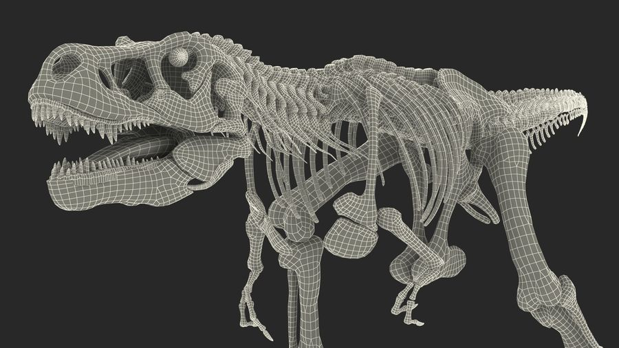 Tyrannosaurus Rex Skeleton Fossil with Skin Walking Pose royalty-free 3d model - Preview no. 25