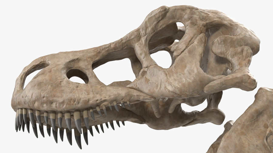 Tyrannosaurus Rex Skeleton Fossil with Skin Walking Pose royalty-free 3d model - Preview no. 14