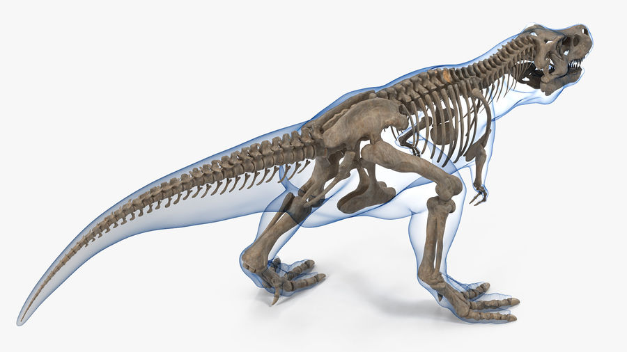 Tyrannosaurus Rex Skeleton Fossil with Skin Walking Pose royalty-free 3d model - Preview no. 6