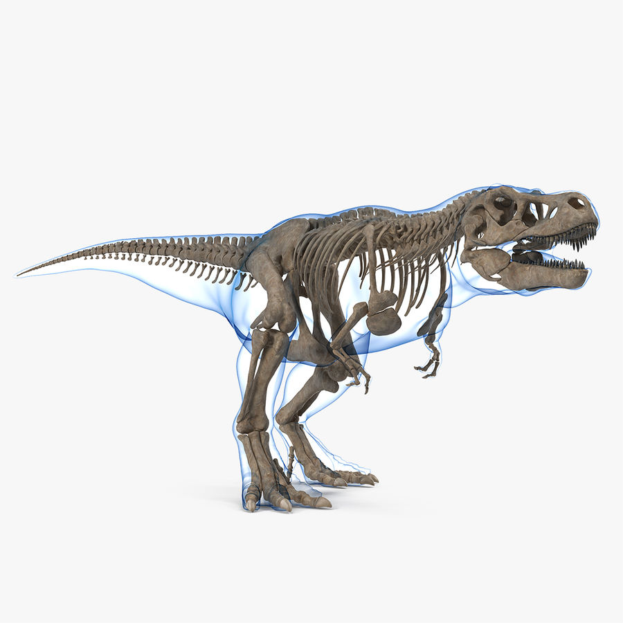 Tyrannosaurus Rex Skeleton Fossil with Skin Walking Pose royalty-free 3d model - Preview no. 1