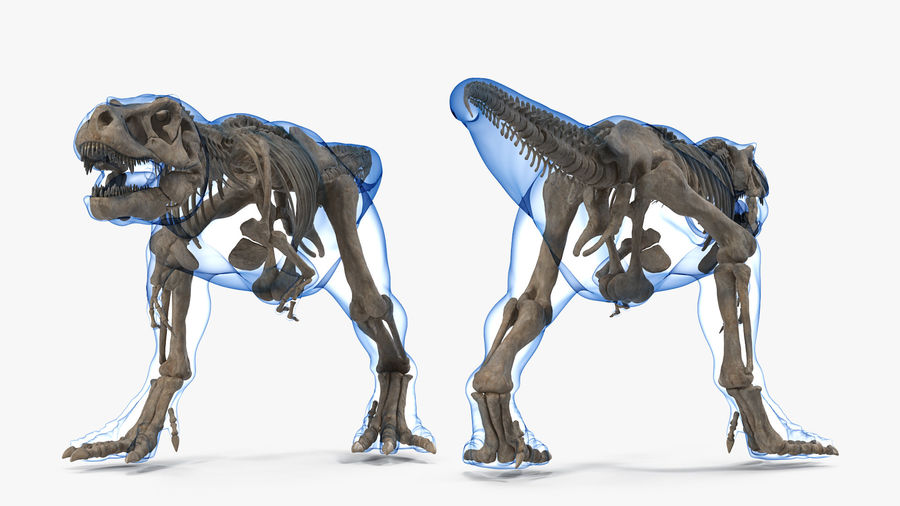 Tyrannosaurus Rex Skeleton Fossil with Skin Walking Pose royalty-free 3d model - Preview no. 7
