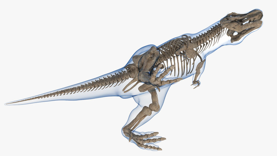 Tyrannosaurus Rex Skeleton Fossil with Skin Walking Pose royalty-free 3d model - Preview no. 11