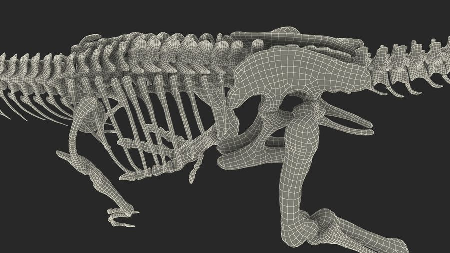Tyrannosaurus Rex Skeleton Fossil with Skin Walking Pose royalty-free 3d model - Preview no. 27