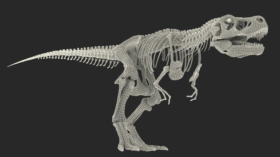Tyrannosaurus Rex Skeleton Fossil with Skin Walking Pose royalty-free 3d model - Preview no. 23