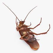 Animerad kackerlacka upp och ner riggad 3d model