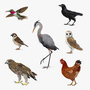Birds Collection 2 3d model