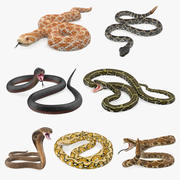 Snakes Collection 5 3d model