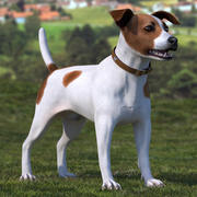 Spotted Jack Russell Terrier Rigged for Maya 3d model