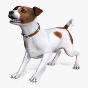 Spotted Jack Russell Terrier Rigged for Cinema 4D 3d model
